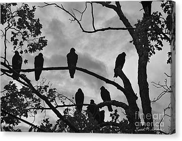 Vultures And Cloudy Sky Bw Canvas Print by Dave Gordon