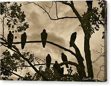 Vultures And Cloudy Sky Canvas Print by David Gordon