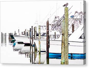 Waiting For Food - Outer Banks Canvas Print by Dan Carmichael