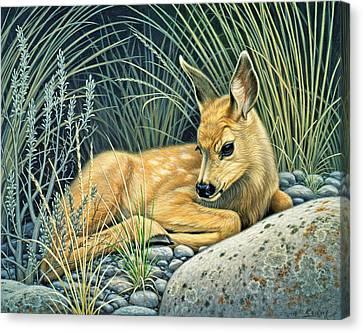 Waiting For Mom-mule Deer Fawn Canvas Print by Paul Krapf