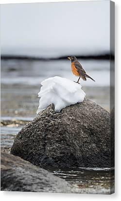 Waiting For Spring Canvas Print by Bill Wakeley
