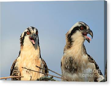 Waiting To Fly Canvas Print by Geraldine DeBoer