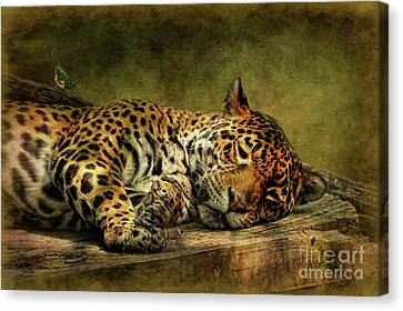 Wake Up Sleepyhead Canvas Print by Lois Bryan