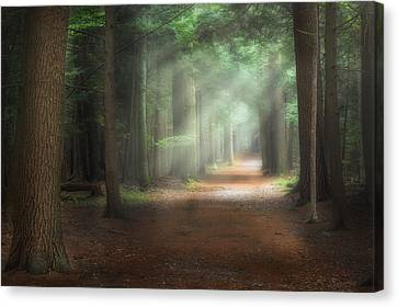 Walk In The Woods Canvas Print by Bill Wakeley