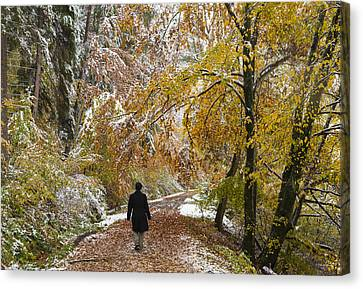Walking Into Winter - Beautiful Autumnal Trees And The First Snow Of The Year Canvas Print by Matthias Hauser