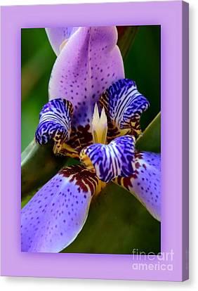 Walking Iris With Purple Border Canvas Print by Carol Groenen