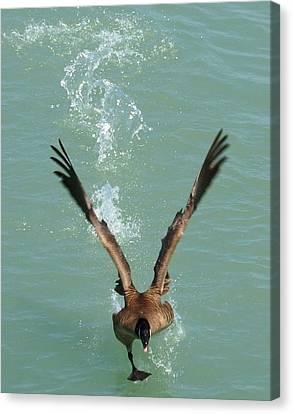 Walks On Water Canvas Print by LJAS Cunnea