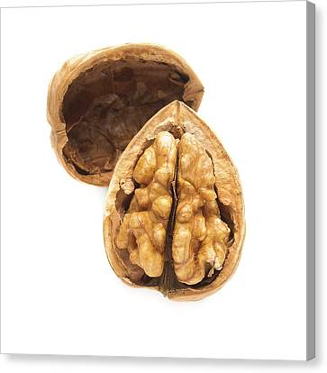 Walnut Half In A Shell Canvas Print by Science Photo Library