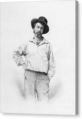 Walt Whitman Frontispiece To Leaves Of Grass Canvas Print by American School