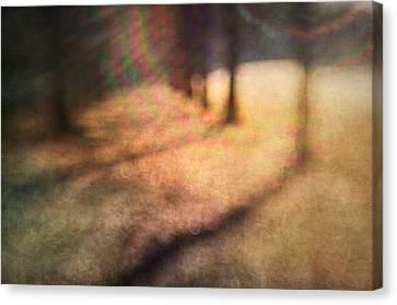 Warner Park Sunrise Canvas Print by David Morel