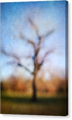 Warner Park Tree Canvas Print by David Morel
