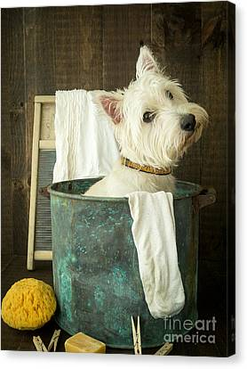 Wash Day Canvas Print by Edward Fielding