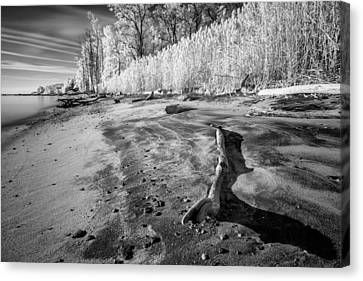 Washed Ashore Canvas Print by Edward Kreis