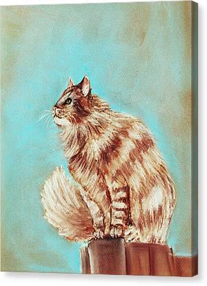 Watch Cat Canvas Print by Anastasiya Malakhova