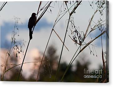 Watchful Bird At Green Cay Canvas Print by Michelle Wiarda