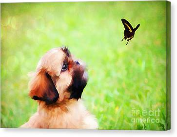 Watching Butterflies Canvas Print by Darren Fisher