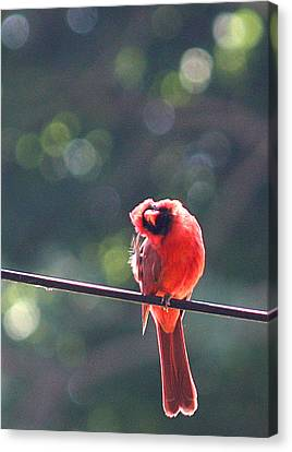 Watching Me Cry Canvas Print by  The Art Of Marilyn Ridoutt-Greene