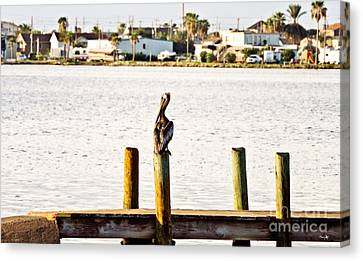 Watching Over The Bay Canvas Print by Scott Pellegrin