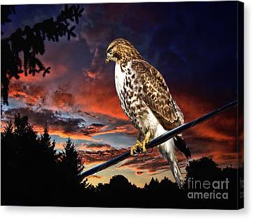 Watching The Sun Set Canvas Print by Andrea Kollo