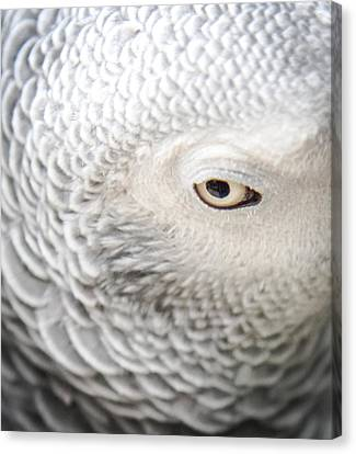 Watching You Watching Me Canvas Print by Karen Wiles