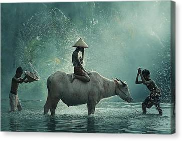 Water Buffalo Canvas Print by Vichaya
