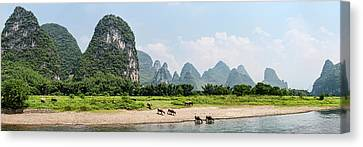 Water Buffaloes Bubalus Bubalis Canvas Print by Panoramic Images