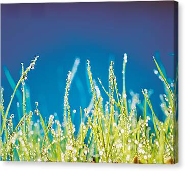 Water Droplets On Blades Of Grass Canvas Print by Panoramic Images