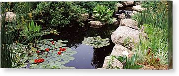 Water Lilies In A Pond, Sunken Garden Canvas Print by Panoramic Images