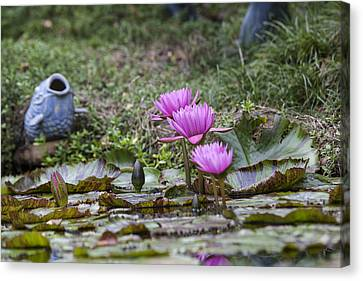 Water Lilly Trio Canvas Print by Charles Warren
