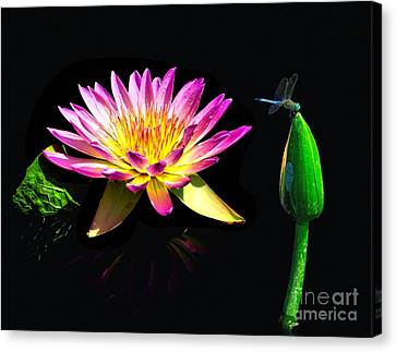 Water Lily Dragon Fly Canvas Print by Nick Zelinsky