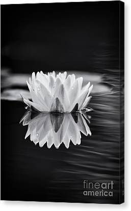 Water Lily Reflection Canvas Print by Tim Gainey