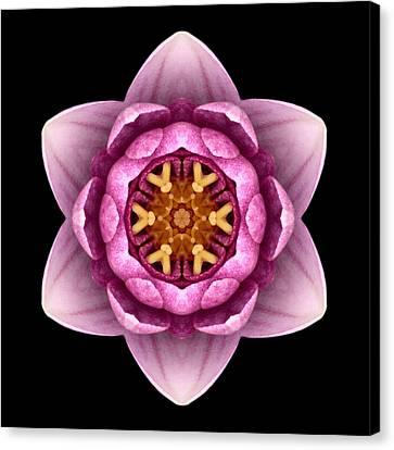 Water Lily X Flower Mandala Canvas Print by David J Bookbinder