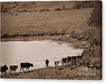 Water Parade Sepia Canvas Print by Fred Lassmann