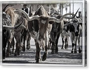 Watercolor Longhorns Canvas Print by Joan Carroll