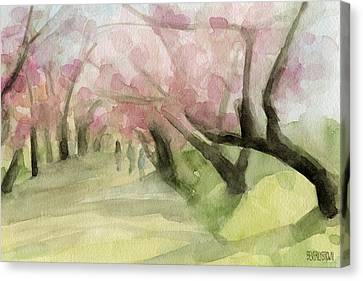 Watercolor Painting Of Cherry Blossom Trees In Central Park Nyc Canvas Print by Beverly Brown