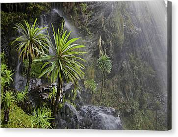 Waterfall At Mount Stanley, Ruwenzori Canvas Print by Martin Zwick