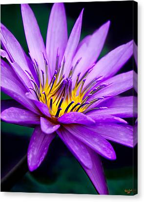 Waterlily #23 Canvas Print by Chris Lord