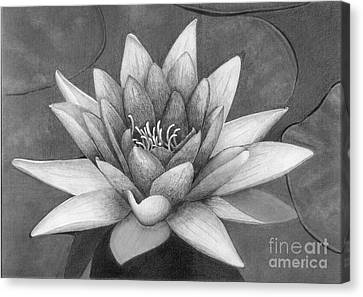 Waterlily Canvas Print by Nicola Butt