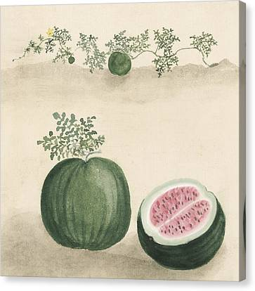 Watermelon Canvas Print by Aged Pixel