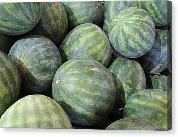Watermelons Canvas Print by Bradford Martin