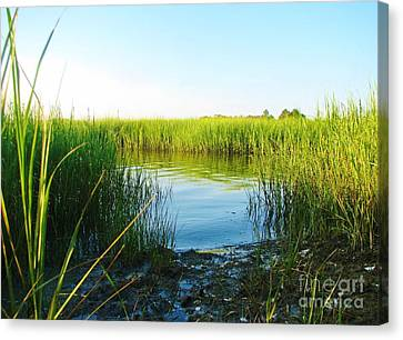 Water's Way Canvas Print by M J