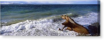 Waves And Driftwood On The Beach Canvas Print by Panoramic Images