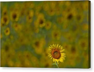 We Worship The Sun Canvas Print by Susan Candelario