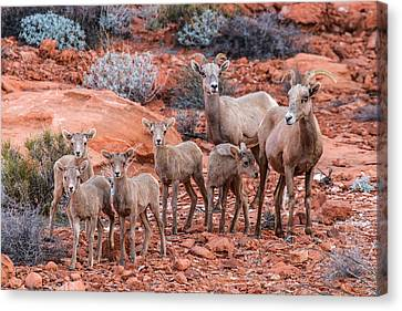 Weary Moms  Canvas Print by James Marvin Phelps