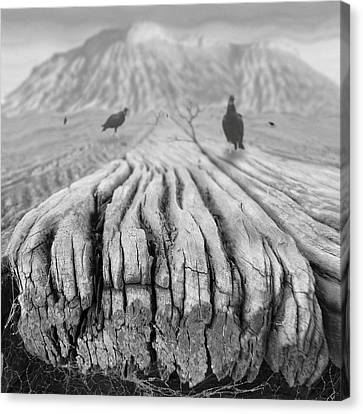 Weathered 3 Canvas Print by Mike McGlothlen