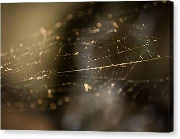 Weaving Webs Canvas Print by Parker Cunningham