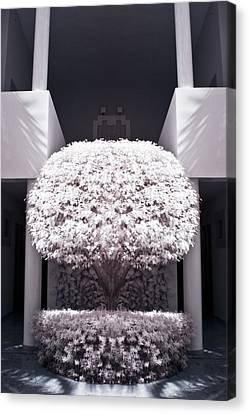 Welcome Tree Infrared Canvas Print by Adam Romanowicz