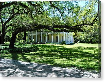 Wesley House And The Oak Canvas Print by Michele Kaiser