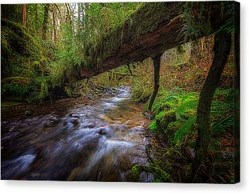 West Humbug Creek Canvas Print by Everet Regal