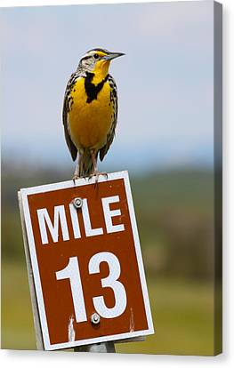 Western Meadowlark On The Mile 13 Sign Canvas Print by Karon Melillo DeVega